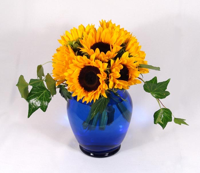 Sunflowers and Ivy - PF90