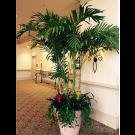 Adonidia Palm Trees - PF04