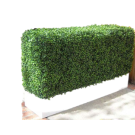 Boxwood Hedge in Planter- PR120