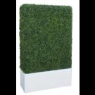 Boxwood Hedge in Planter- PR121