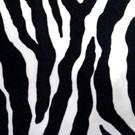 Zebra - LPR19